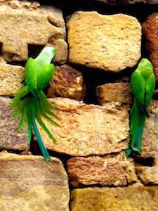 couple-of-parrots
